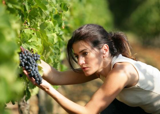 femme travaillant dans les vignes