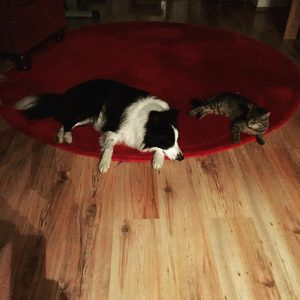 Nachtwchter  Night watch ilovemybordercollie ilovemydog bordercolliesofinstagram bordercollie ilovemycat instacat