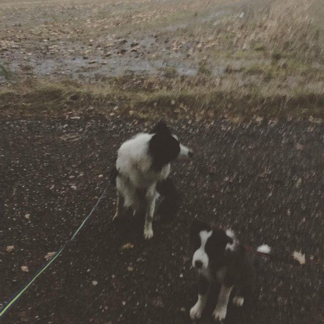 Felder frisch gedngt mit HundeChanel No 5  dogs chanelhellip