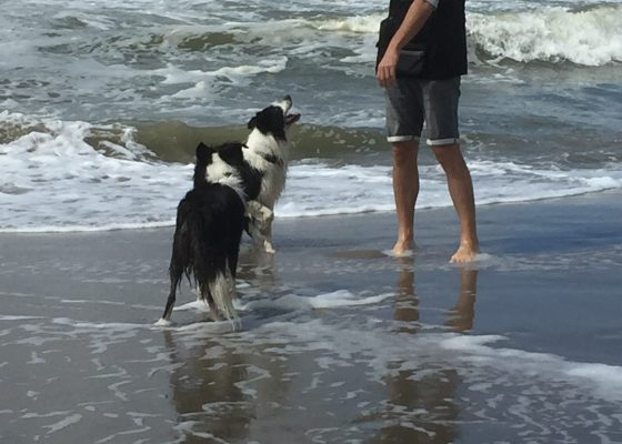 Dogs in paradise #ilovemybordercollie #bordercollie #qualitytime #vacationtime #seaside #instagood #instaborder