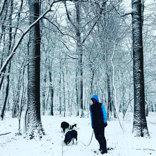 Winter again happydogmum doglover winterwonderland bordercollie ilovemybordercollie bordercolliesofinstagram bordercolliesrock