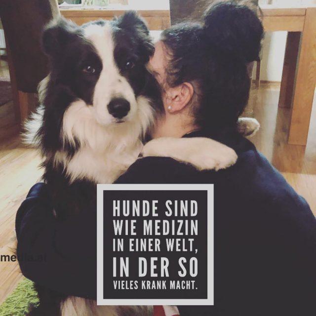 Simply Love hundundkind bordercollie bordercolliesofinstagram ilovemybordercollies lieblingshund tierliebe doglover proudmumhellip
