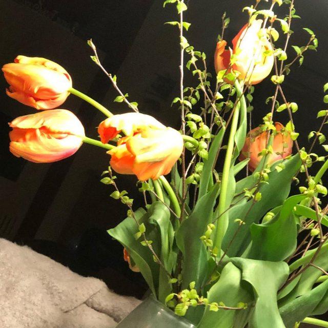 Die schnsten Tulpen ever! 10 cm Blten! flowersoftheweek blumenweingartshofer endlichfrhling